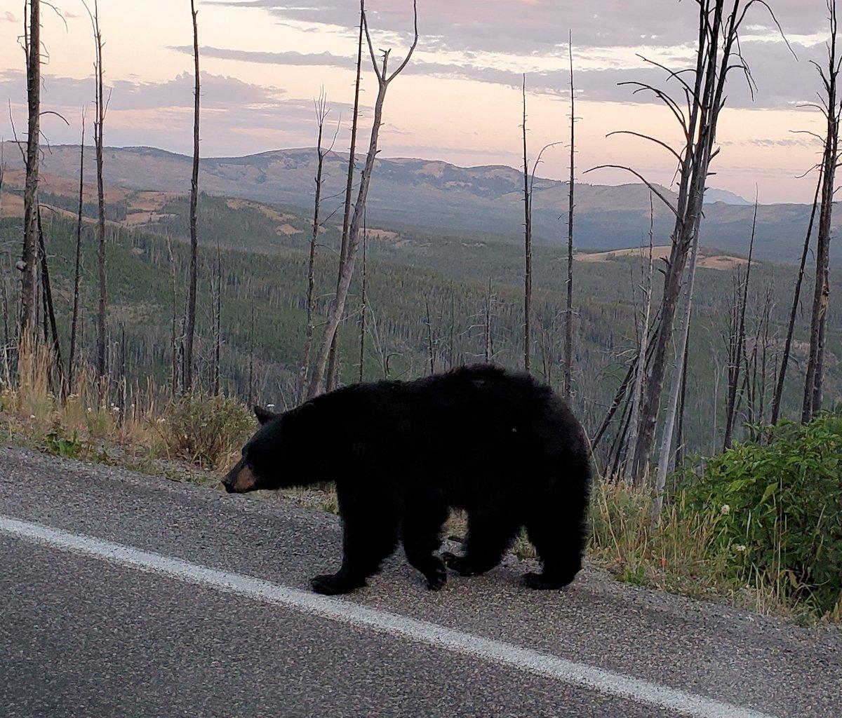 4 1/4 bears